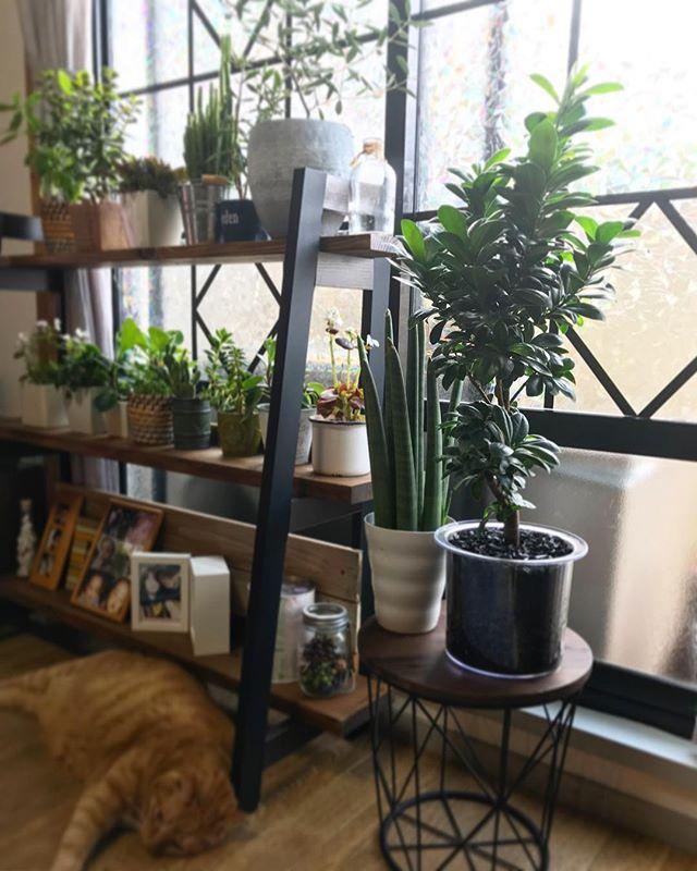 幸せを呼び運気を引き込む植物