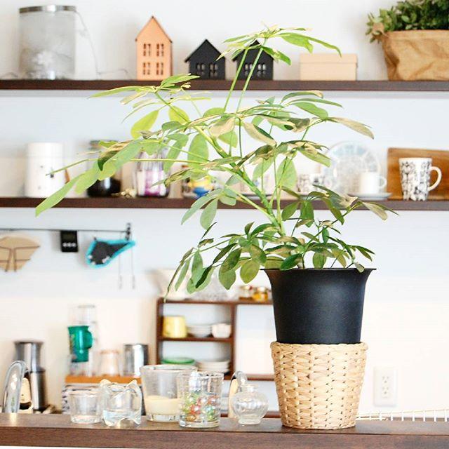 斑入りなどの種類もある植物