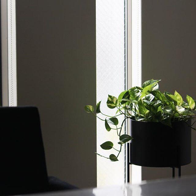 ハンギングにもおすすめの観葉植物