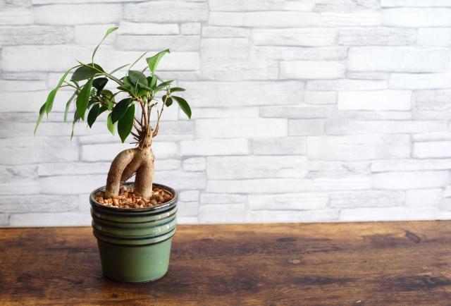 海外でもよく見かける強い生命力の植物