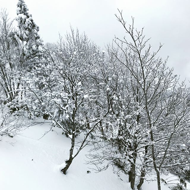 美しいを表現する素敵な言葉「樹氷」