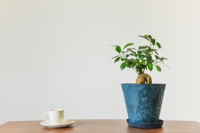 金運アップという意味もある植物