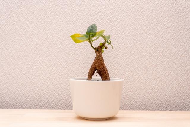 基本的に育てやすい植物