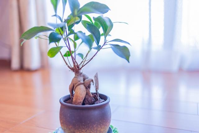 独特なシルエットで人気の植物