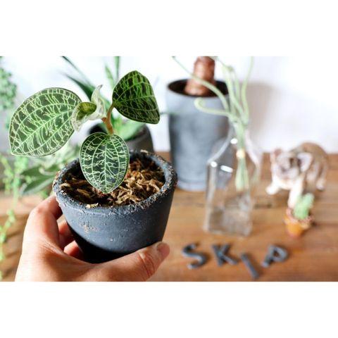 小さめ観葉植物3