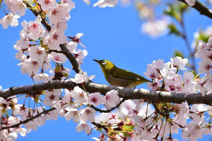 美しい古語《春・夏》