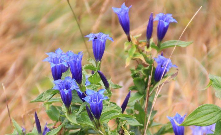 青い花の花言葉3