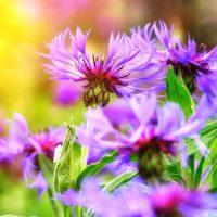 友情を意味する花言葉を持つ花達。絆が深まる贈り物にもできる人気の花々って?