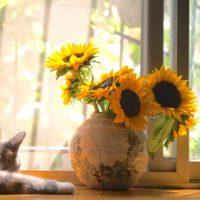 《夏の花》花言葉を集めました。贈り物にも想いを込められる素敵な花言葉って?