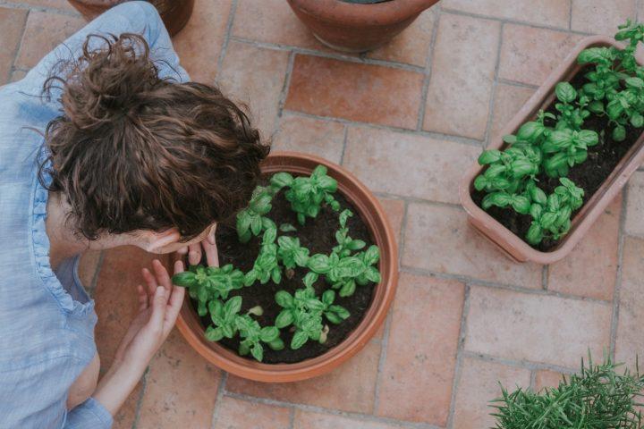 初心者におすすめの家庭菜園方法《プランター》