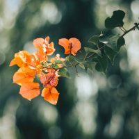 オレンジ色の花に込められた花言葉12選。プレゼントにも人気の品種をご紹介