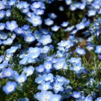 青い花の種類と花言葉16選。色だけじゃない、込められた美しい言葉をご紹介