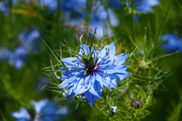 青い花の花言葉2