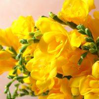黄色い花には素敵な花言葉がたくさん。ポジティブな意味をもつ植物まとめました