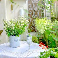 夏におすすめな寄せ植え14選をご紹介。涼しく鮮やかに庭を彩ってみませんか?