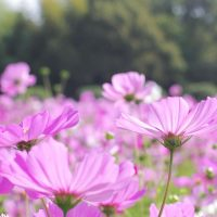 贈り物にも◎「幸せ」な意味の花言葉19選。素敵な想いのこもった花をまとめました
