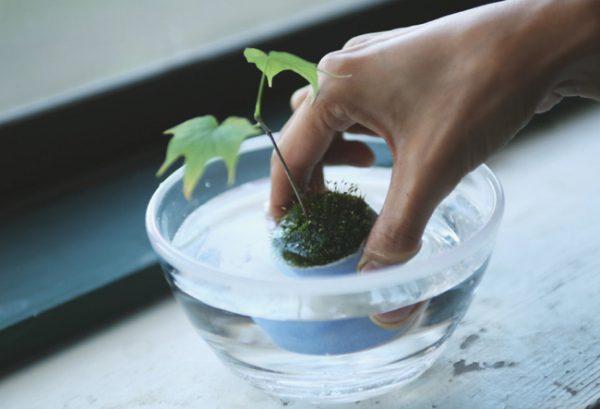 盆栽の基本の育て方9