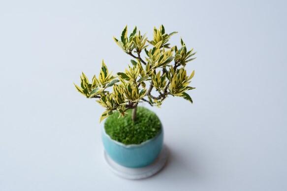 盆栽の基本の育て方7
