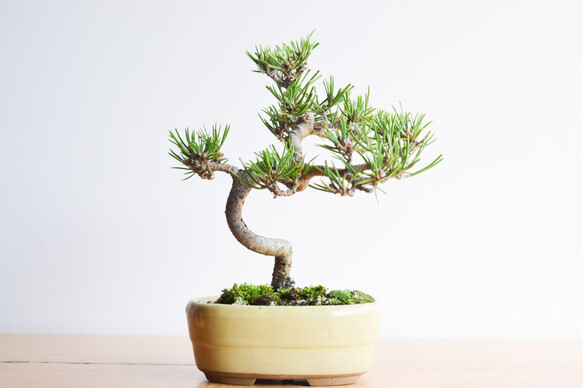盆栽の基本の育て方2