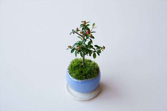 盆栽の基本の育て方6