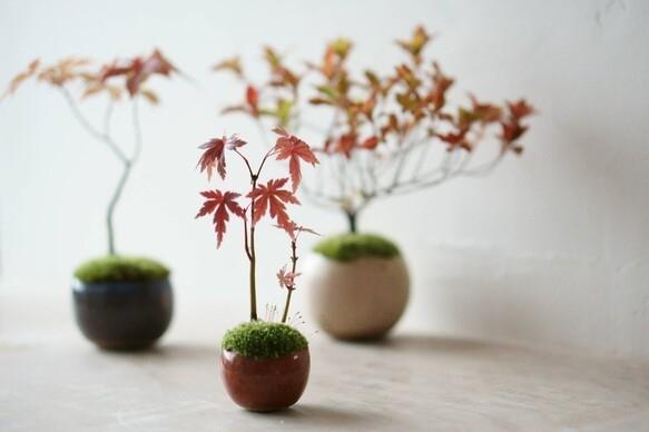 盆栽の基本の育て方4