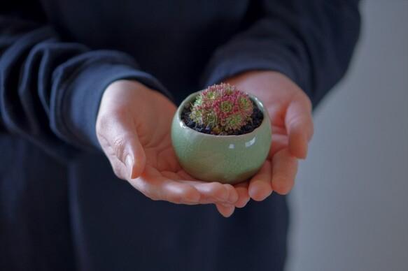 盆栽の基本の育て方8