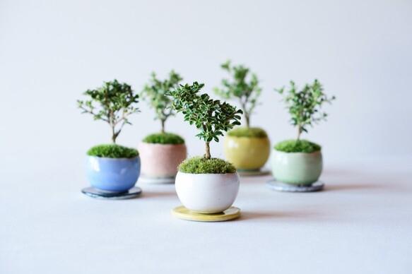 盆栽の基本の育て方3