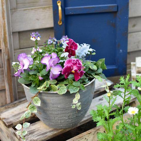 ダイソーのプラ製植木鉢をおしゃれにリメイク