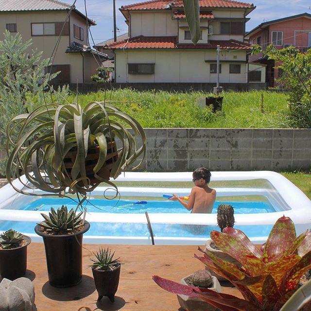 南国風の庭にプールを置いて楽しむ