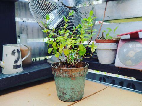 ワッツのプラ製植木鉢をおしゃれにリメイク