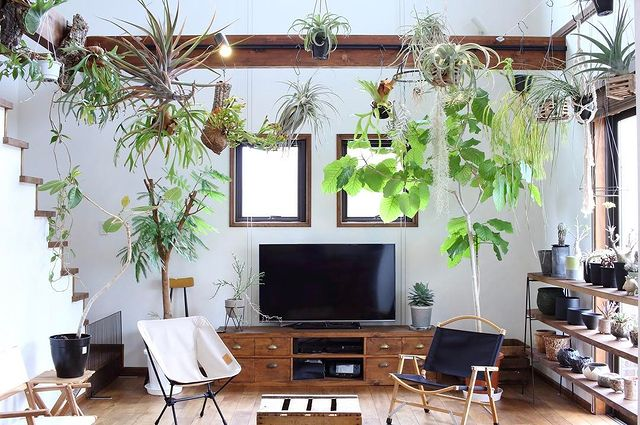 植物のある暮らし