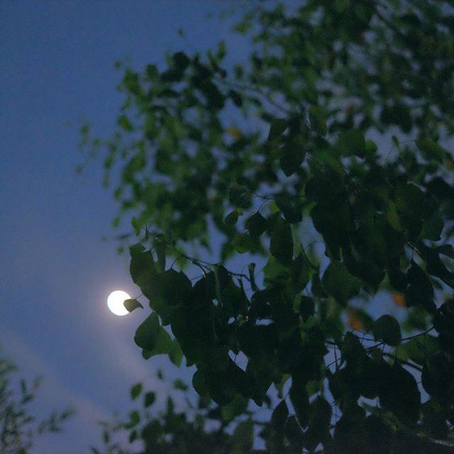 月のつく熟語「霽月」