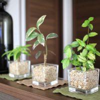 おしゃれで小さめの観葉植物を飾りませんか?インテリアとしても◎なおすすめをご提案