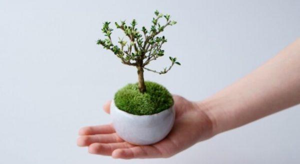 盆栽の基本の育て方