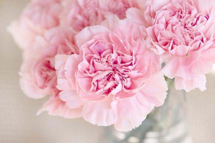 尊敬の花言葉を持つ花③カーネーション