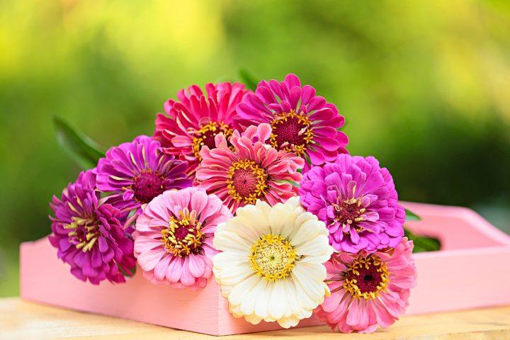 尊敬の花言葉を持つ花⑧ガーベラ
