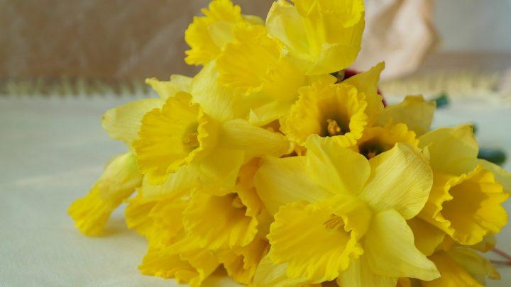 尊敬の花言葉を持つ花①ラッパスイセン