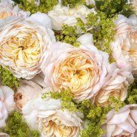 相手を笑顔にする花言葉をもつ花達。プレゼントにも出来る花を季節別にご紹介