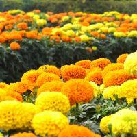 「健康」の意味の花言葉16選。大切な人へのプレゼントにもおすすめの花をご紹介