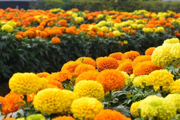 健康の花言葉を持つ花《夏》