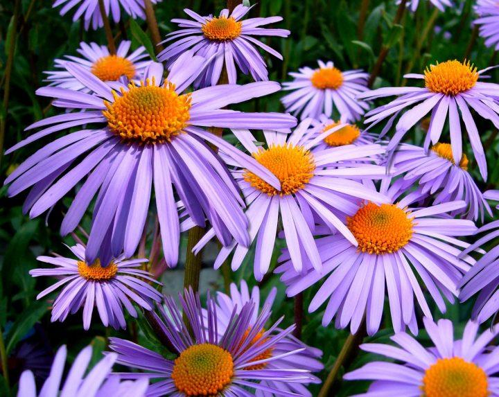 健康の花言葉を持つ花《秋》