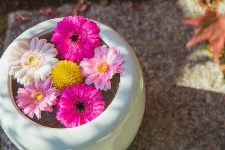健康の花言葉を持つ花《春》