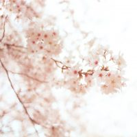 美しい日本の二字熟語15選。響きが素敵な和・幻想的な言葉をまとめました