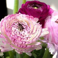 《尊敬》の意味をもつ花言葉18選。感謝の気持ちも伝わる贈り物に最適な花達