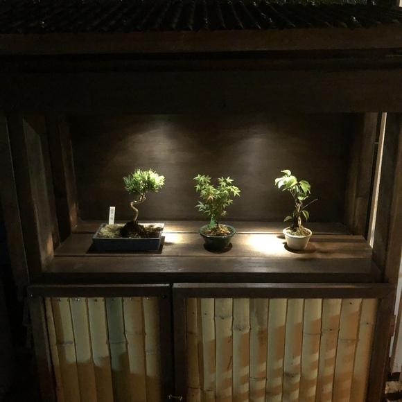 和モダンな庭を気軽に楽しめる盆栽