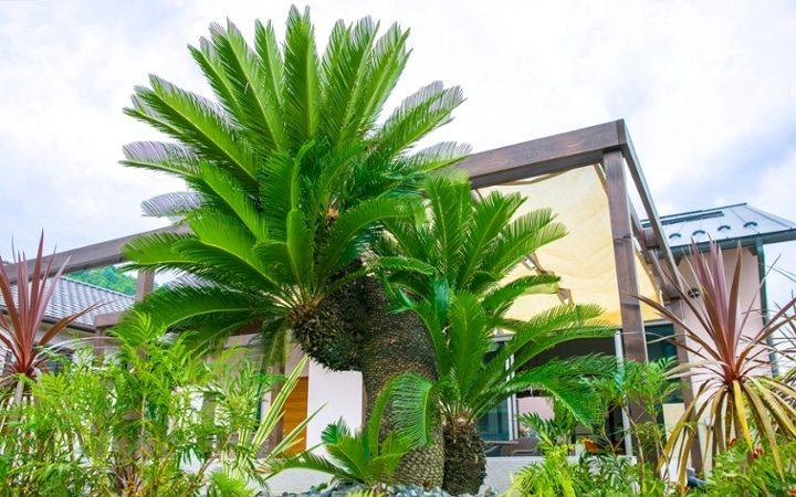 エキゾチックな雰囲気の南国風の庭