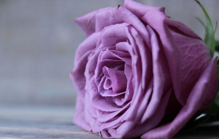 尊敬の花言葉を持つ花①バラ