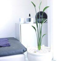 お部屋がパッと華やぐ、花を咲かせる観葉植物。初心者でも挑戦しやすい品種まとめ