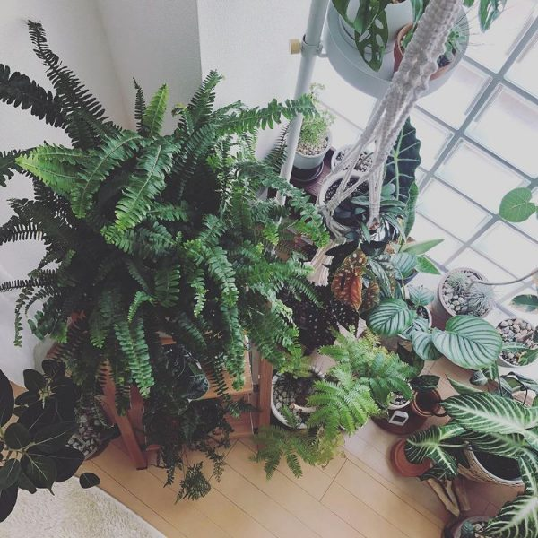 植物と暮らす2LDK3