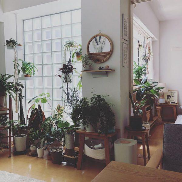 植物にとっても、自分たちにとっても居心地のよい空間にしたい5